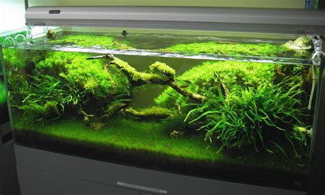 Pics Collection of Truly Inspired Aquascape   kinds of